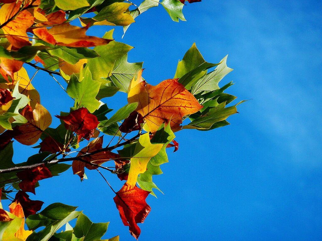 autumn, leaves, foliage